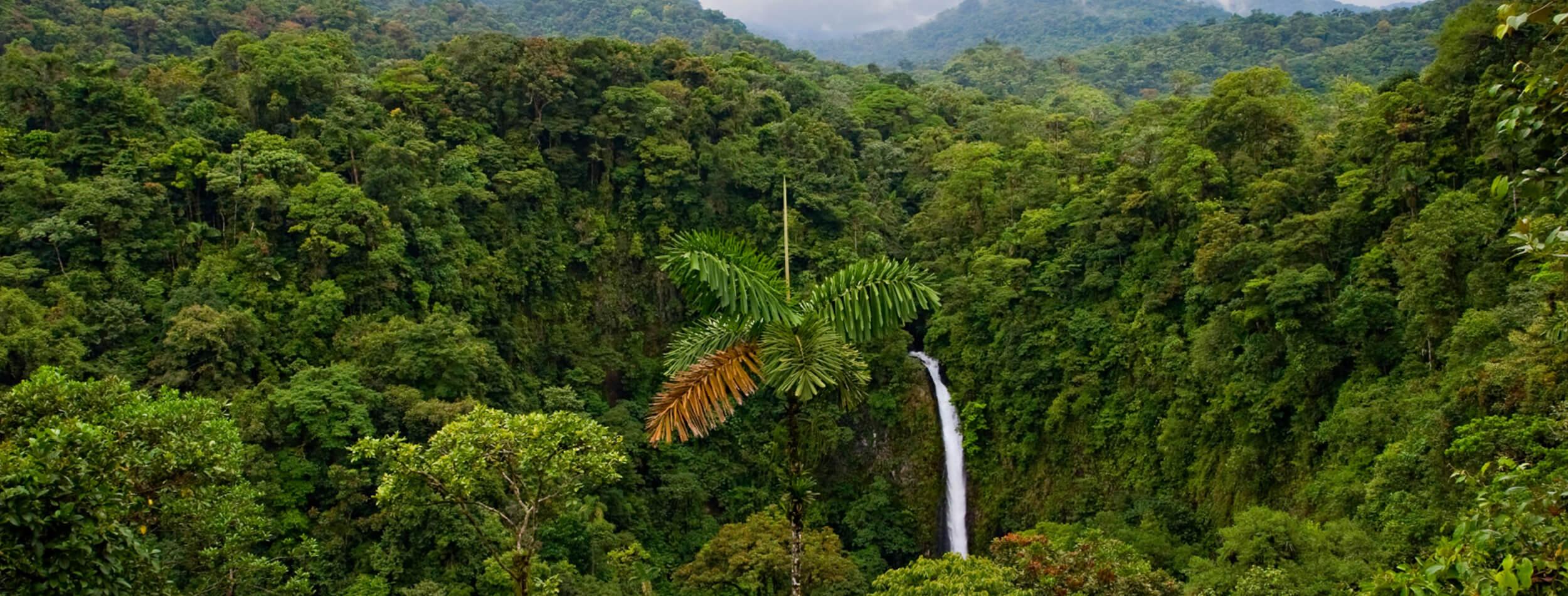 Costa Rica Jungle Rhythms!