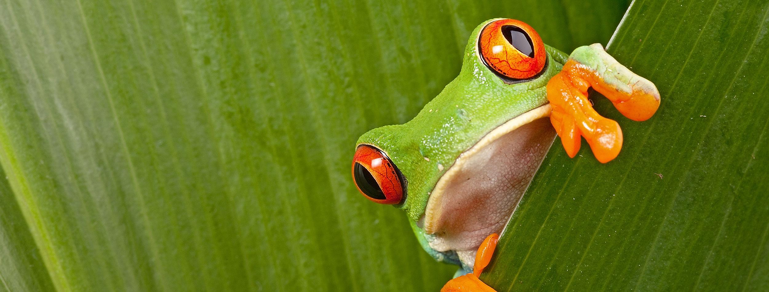 datos interesantes sobre Costa Rica
