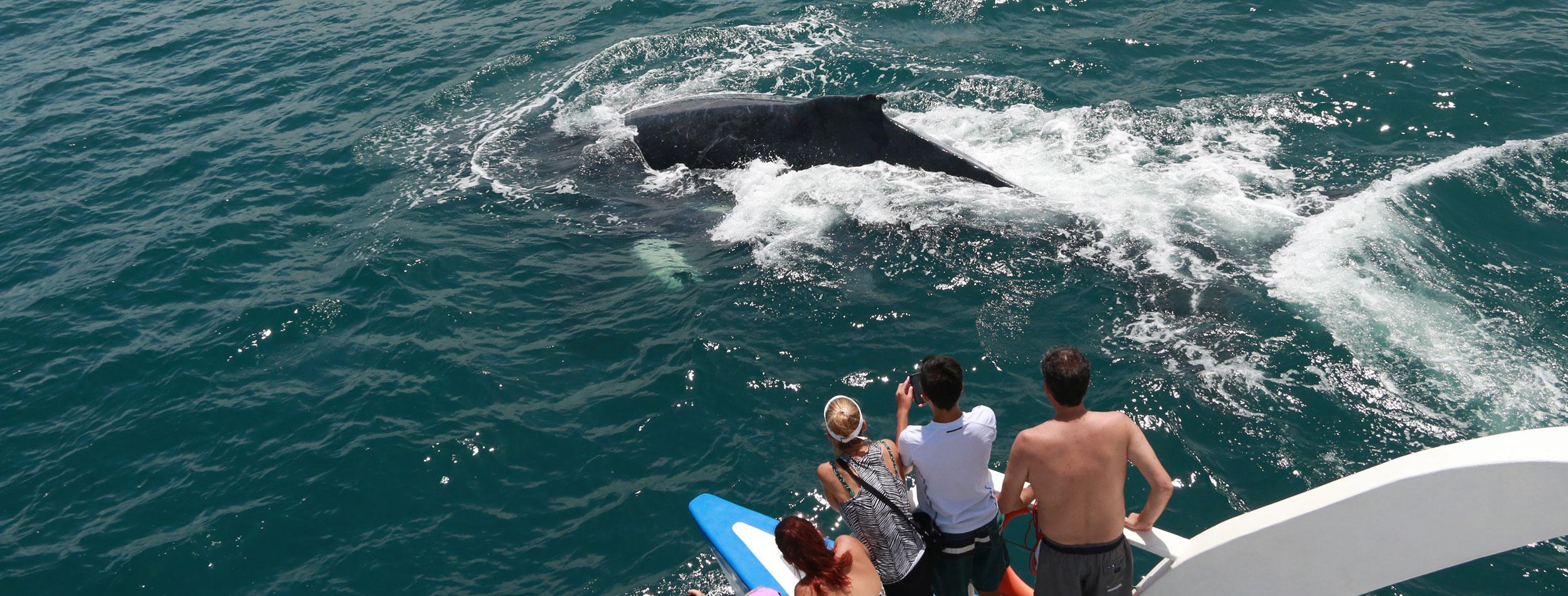 Delfines y Ballenas